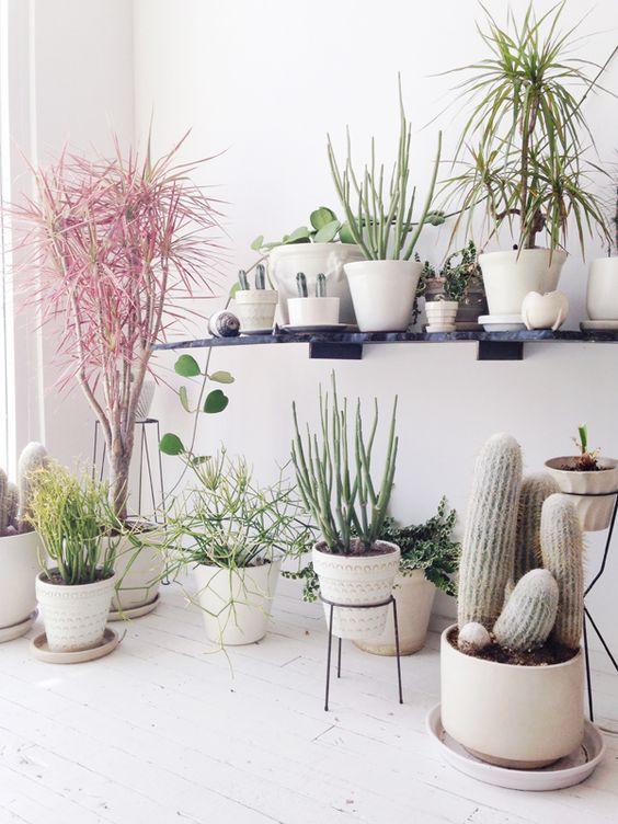 piante-grasse-soggiorno-salotto