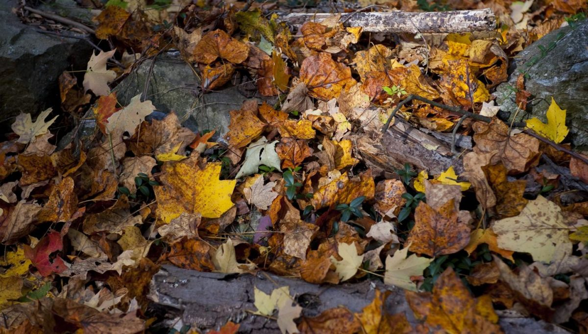 vetrina-negozi-autunno-3