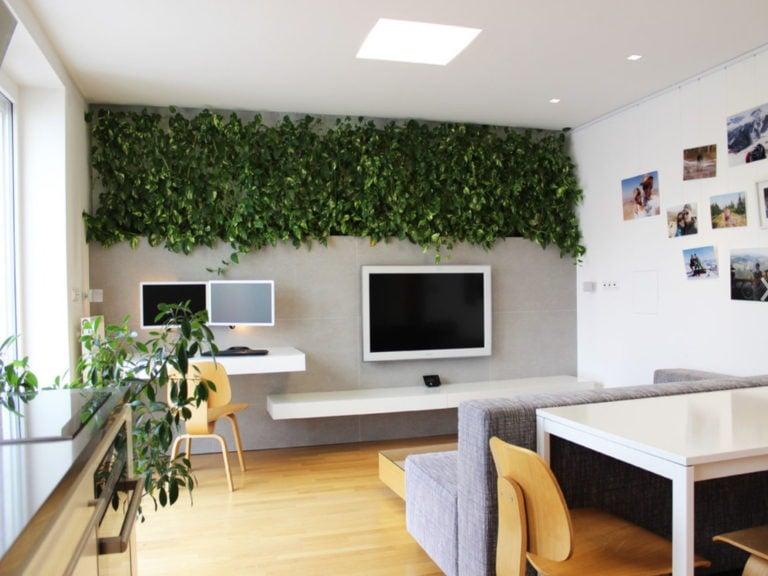abbellire-scrivania-piante