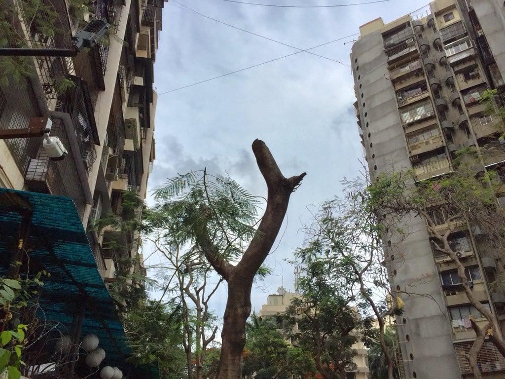 abbattimento-alberi-condominio