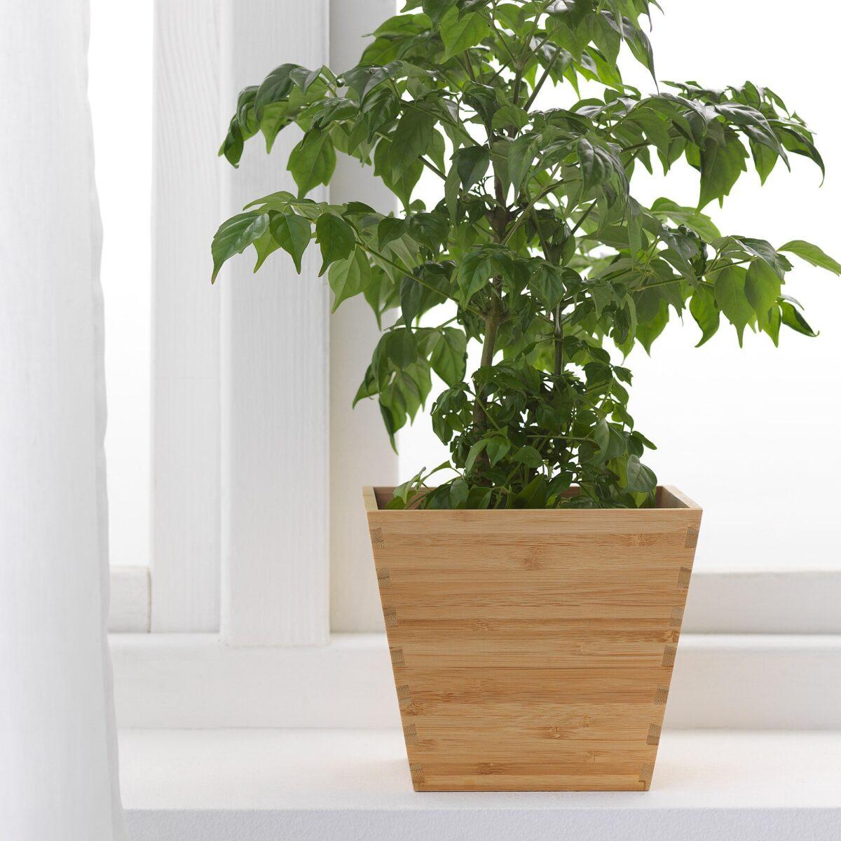 ikea-vildapel-portavasi-bambu