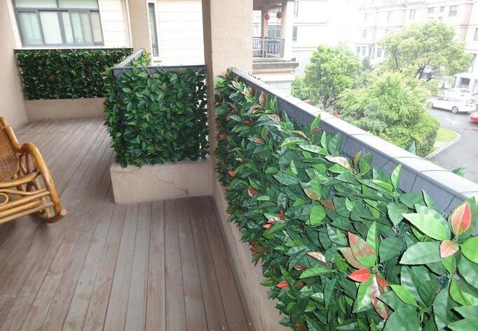 siepe-da-balcone