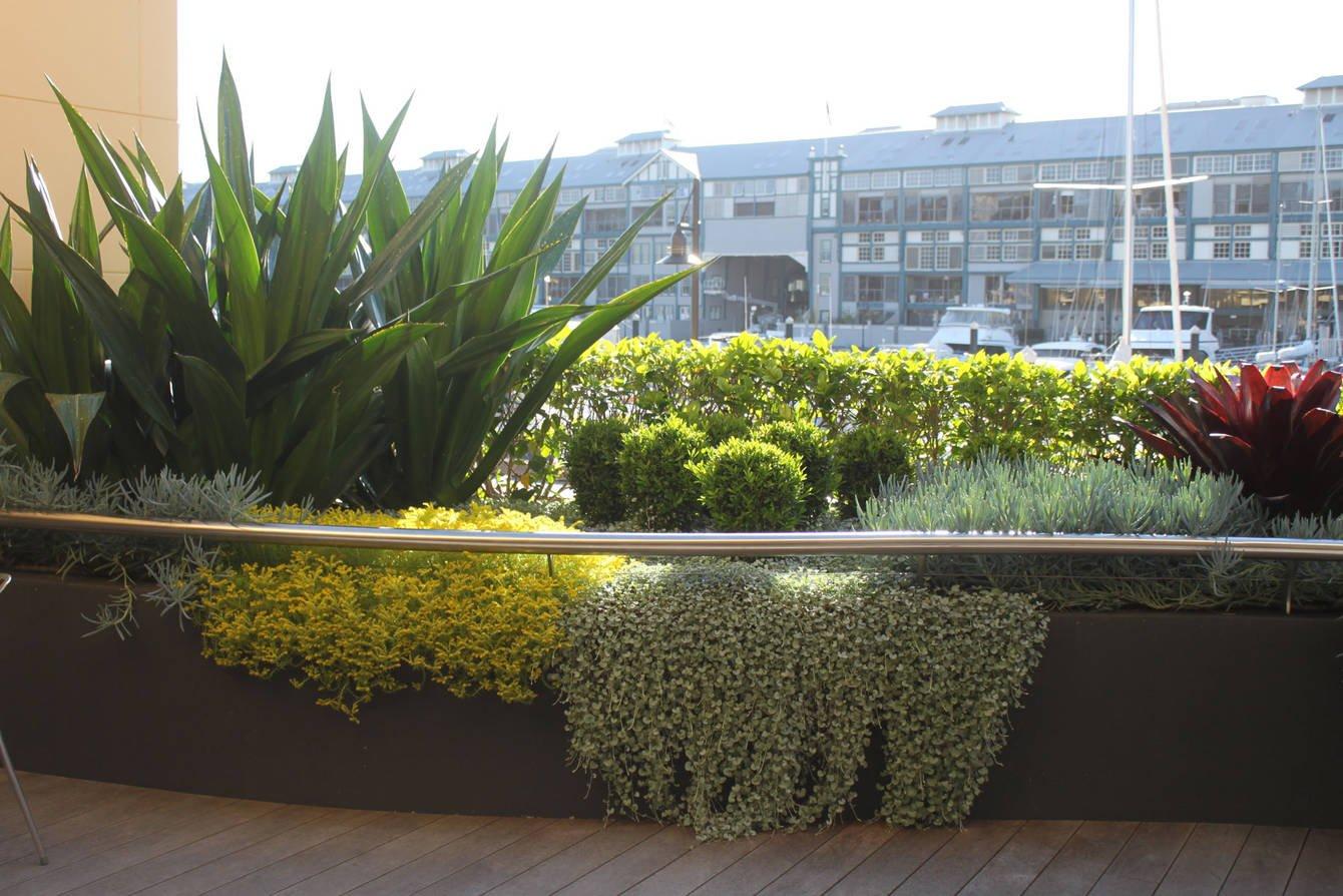 siepe-balcone