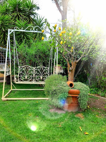come-disporre-piante-giardino-angoli-agrumi