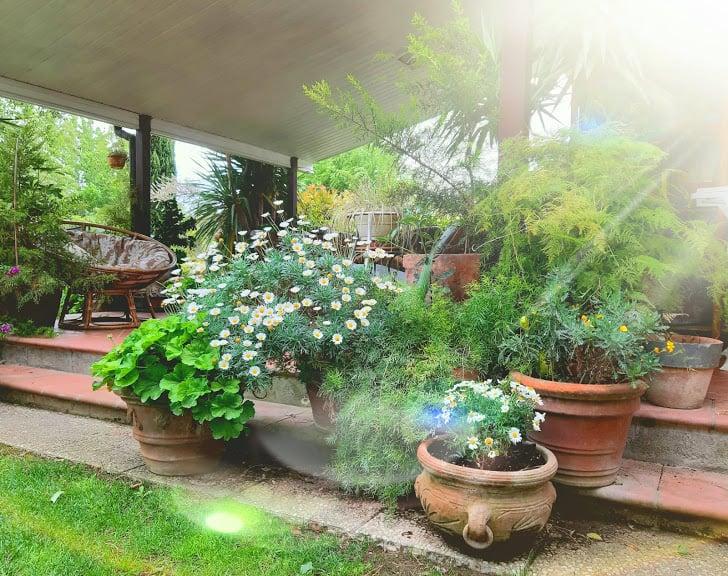 come-disporre-piante-giardino-vasi-fiori