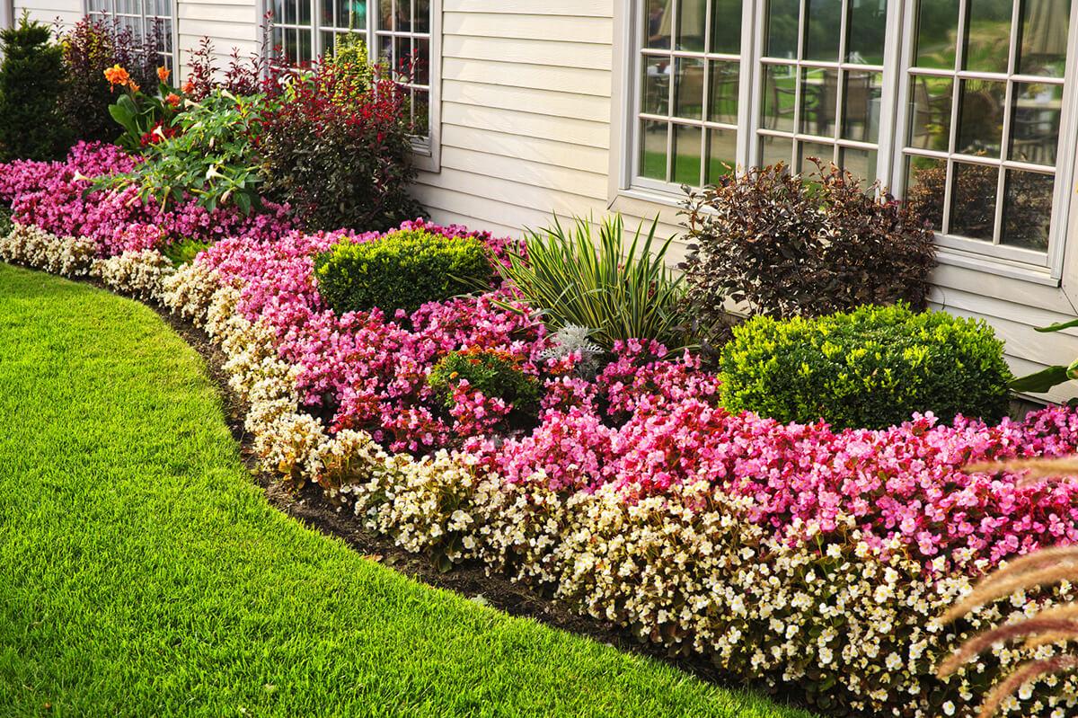 come-disporre-piante-giardino