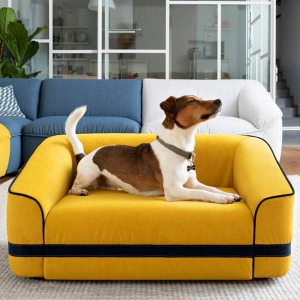 Arredamento-casa-cani-gatti-divano
