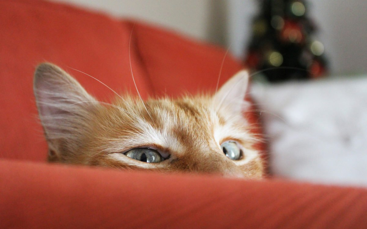 divano-animale