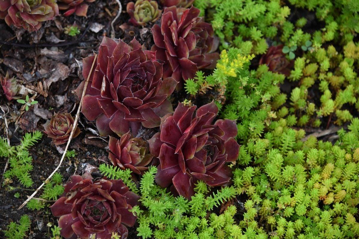 Fiori Perenni Da Balcone 10 piante più resistenti al caldo per balconi e terrazzi