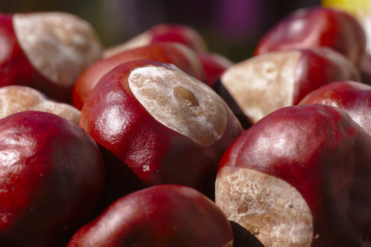 color-castagno-frutto