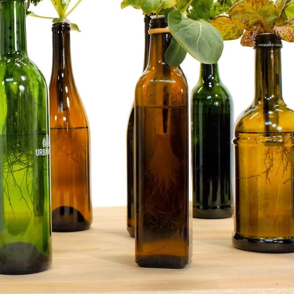 creare-orto-bottiglia-2