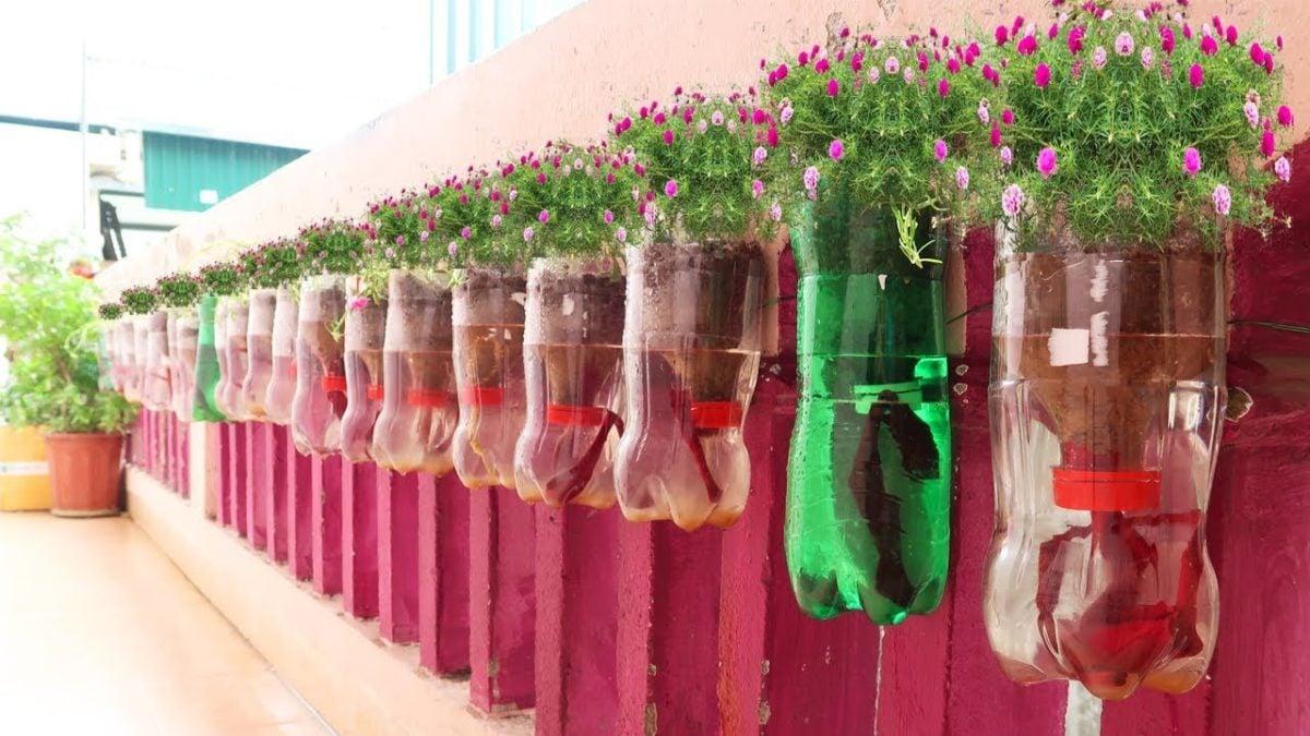 creare-orto-bottiglia-6