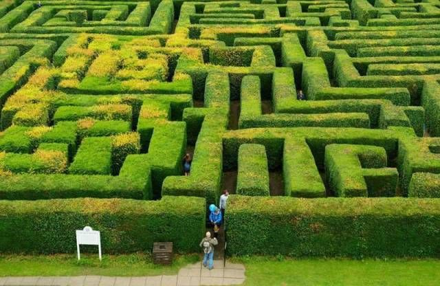 labirinto-siepe