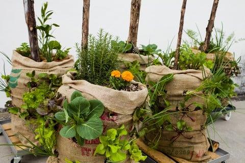10-idee-creative-per-un-orto-domestico-sul-terrazzo-sacchi