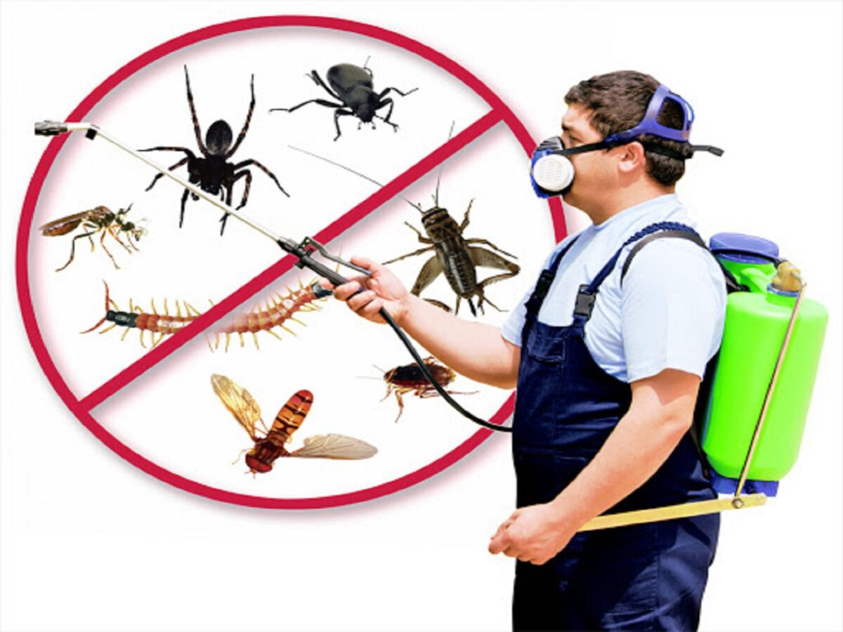 insetti-in-casa-12