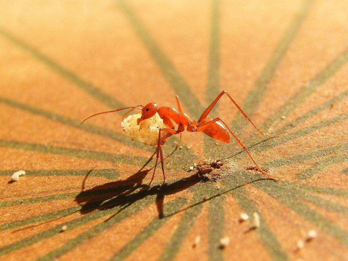 insetti-in-casa-3