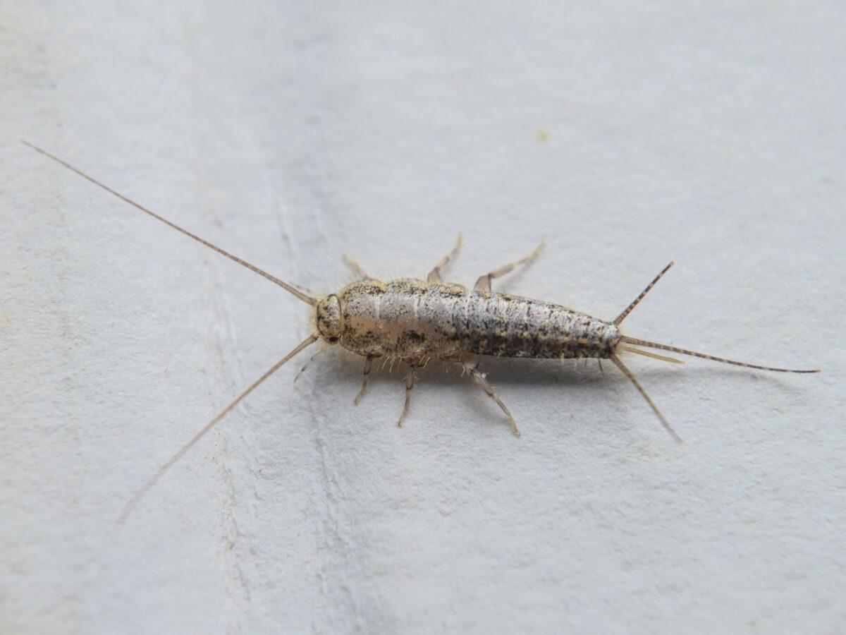 insetti-in-casa-4