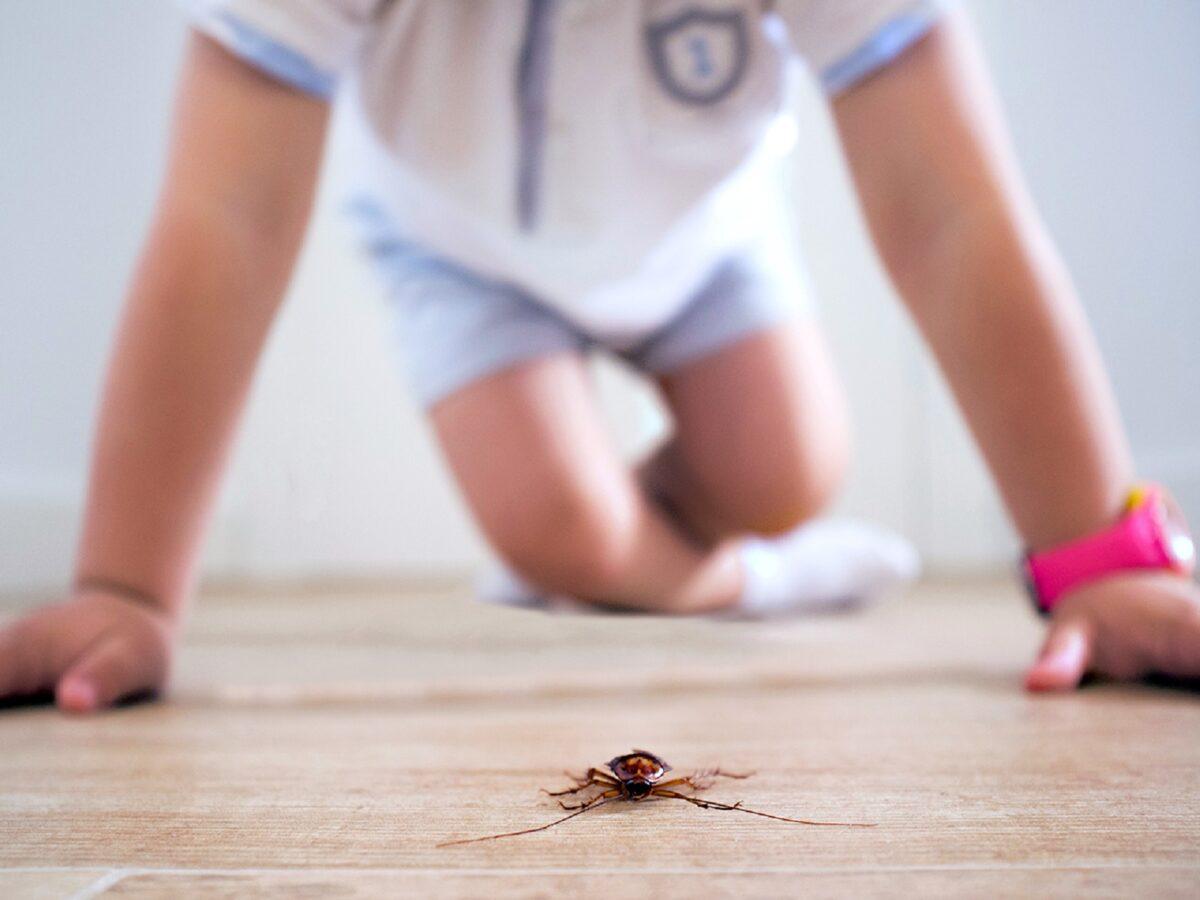 insetti-in-casa-5