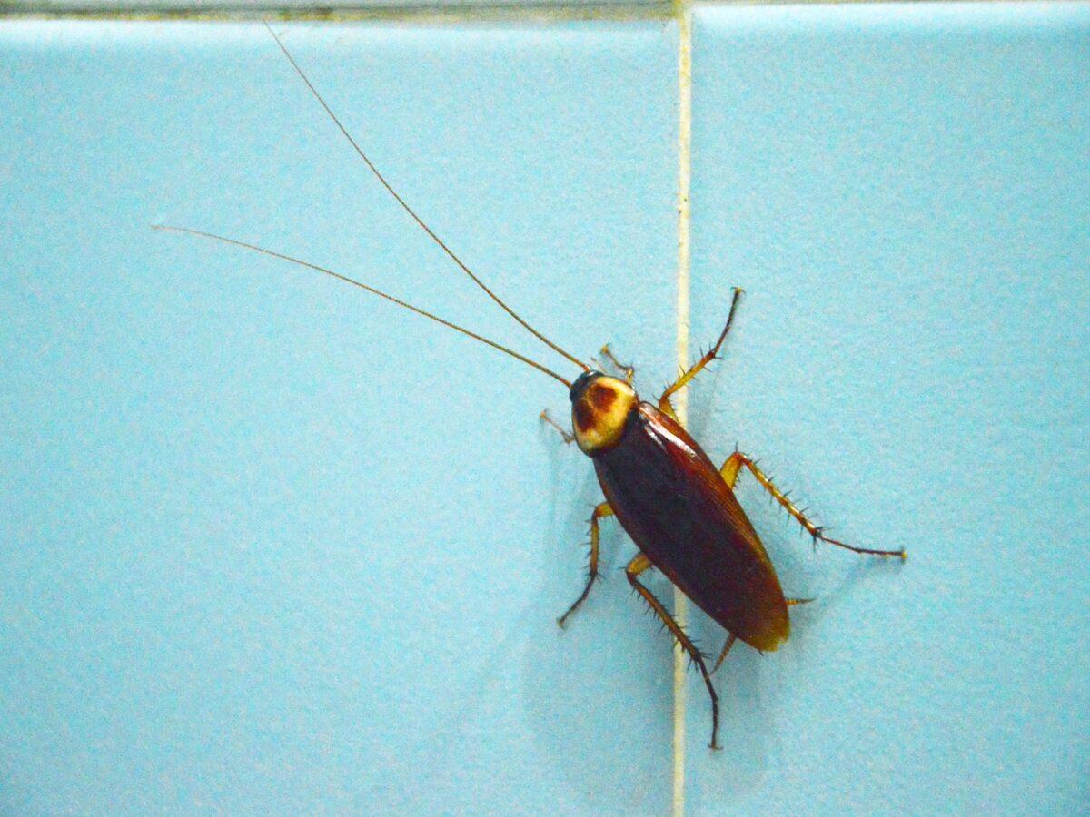 insetti-in-casa-6