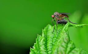 lontano-zanzare-balcone-zanzara-piante