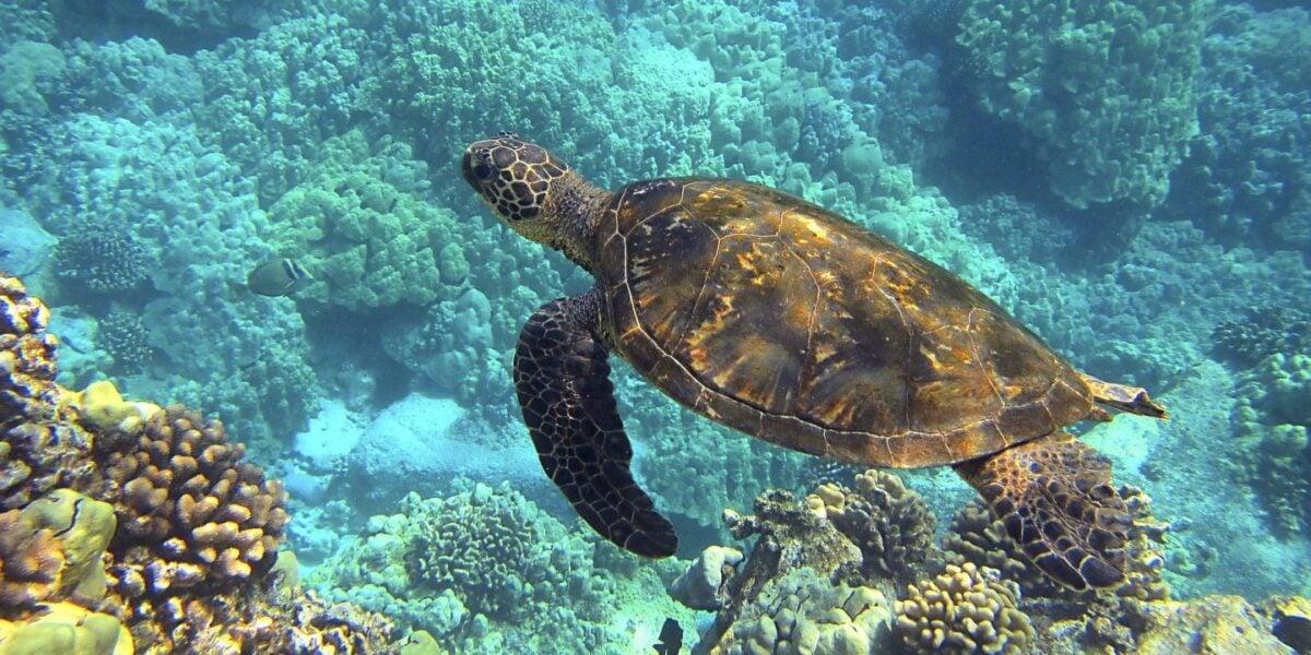 pulire-vasca-tartarughe-10