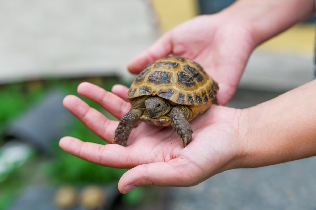 pulire-vasca-tartarughe-15
