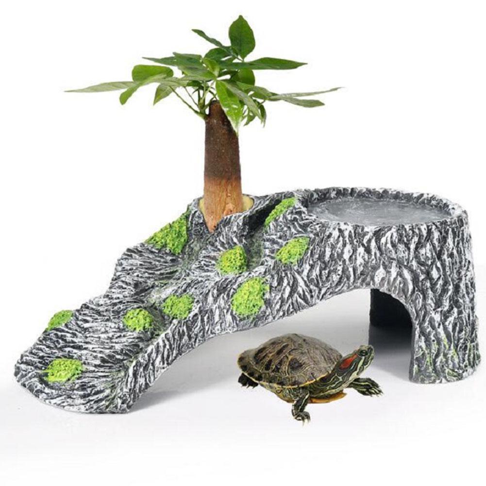 pulire-vasca-tartarughe-17