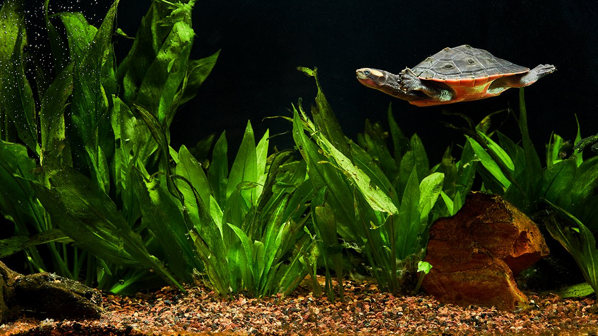 pulire-vasca-tartarughe-3