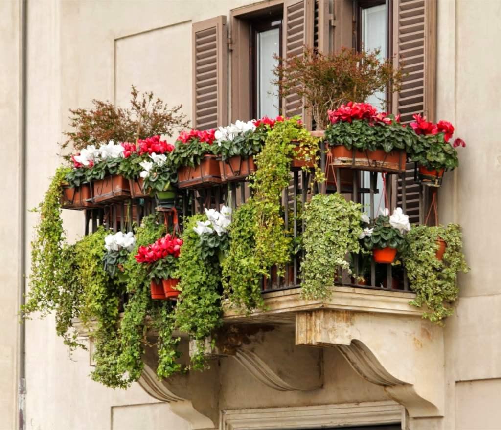 10-piante-da-balcone-sempreverdi