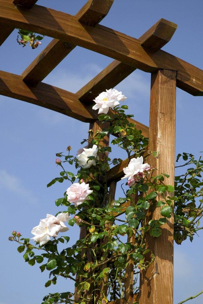 10-piante-rampicanti-balcone-3