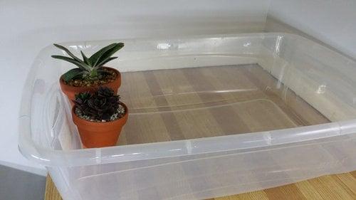 Annaffiare-le-piante-in-vacanza-6