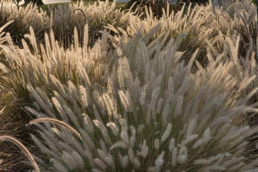 Le piante più adatte a resistere all'afa: 5 proposte e un suggerimento