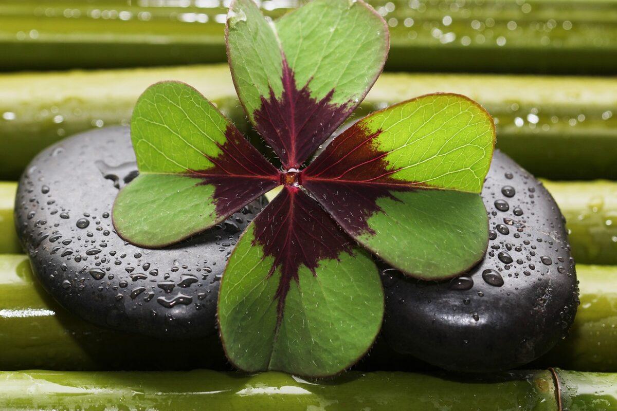 four-leaf-clover-3589385_1280