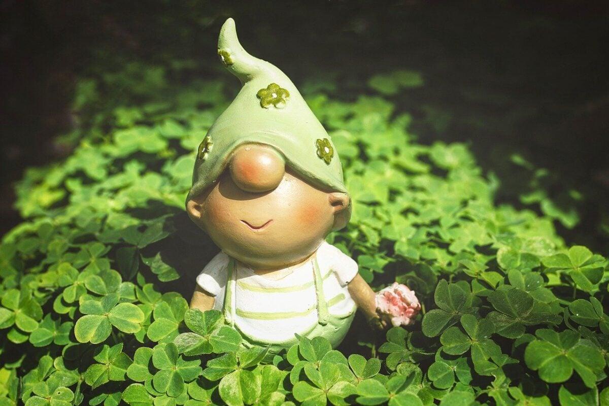 piante-fortuna
