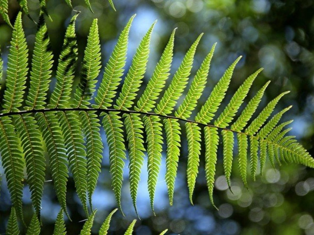 piante-portafortuna-felce