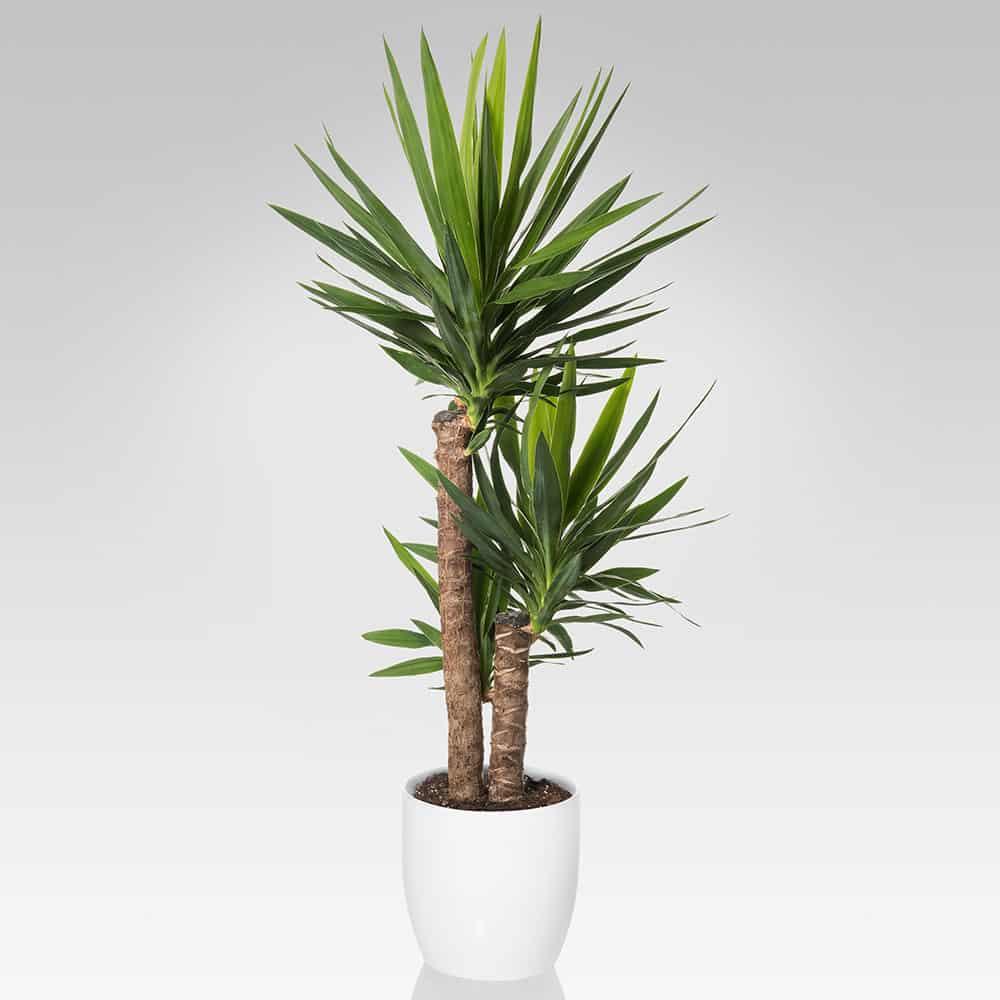10 piante portafortuna per la tua casa