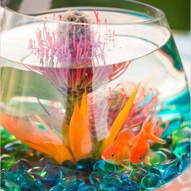 centrotavola-estivo-pesci rossi