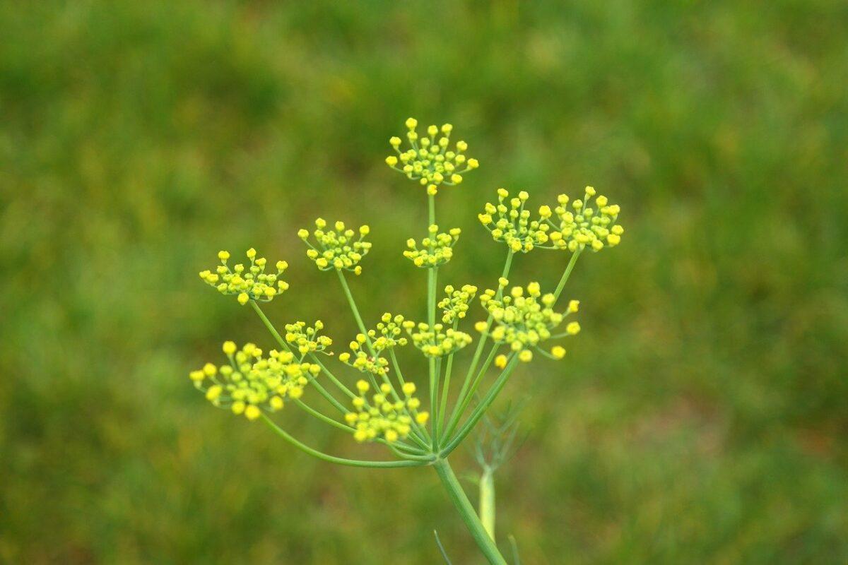 piante-stile-provenzale 1