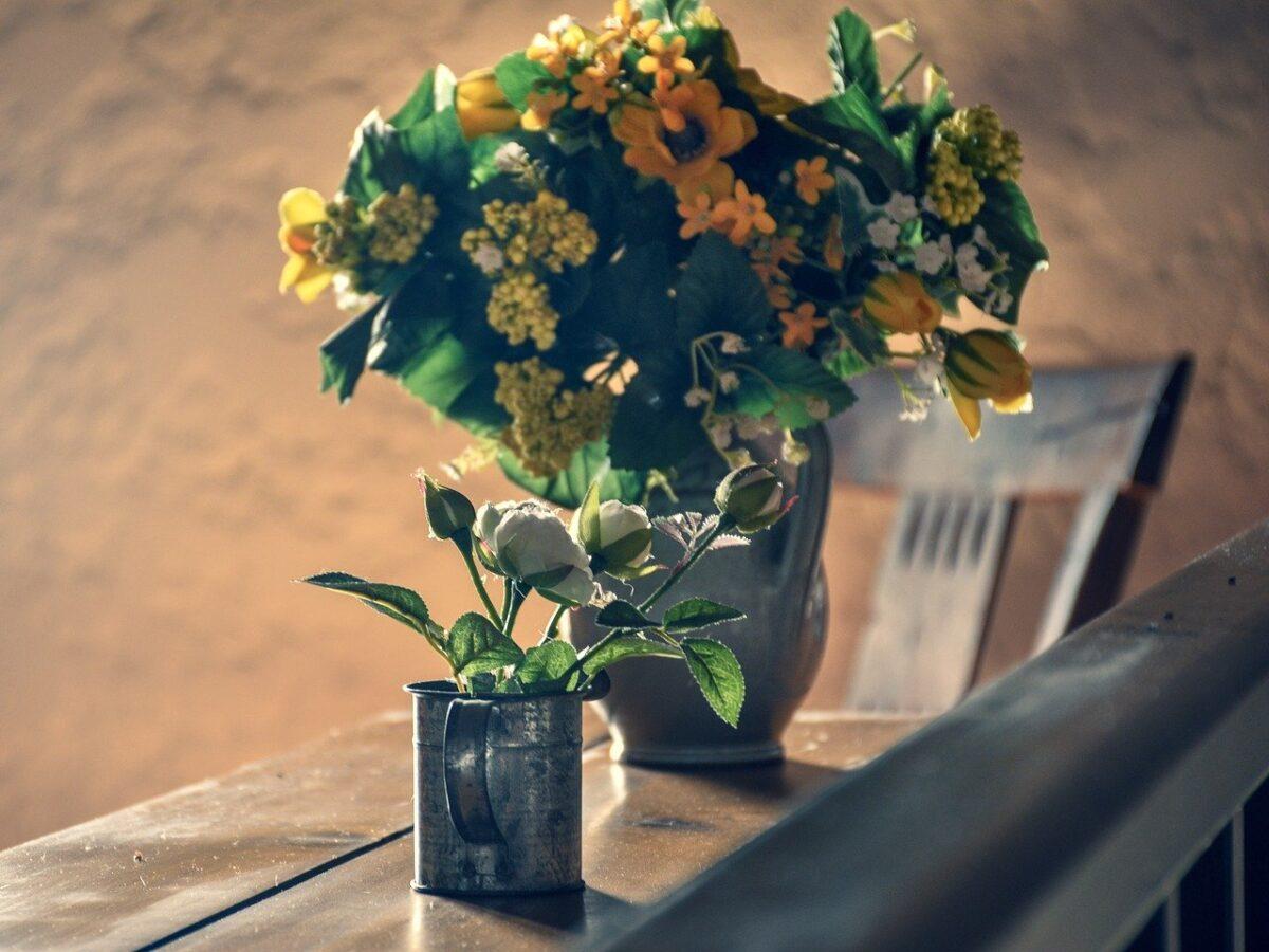 piante-stile-provenzale 2