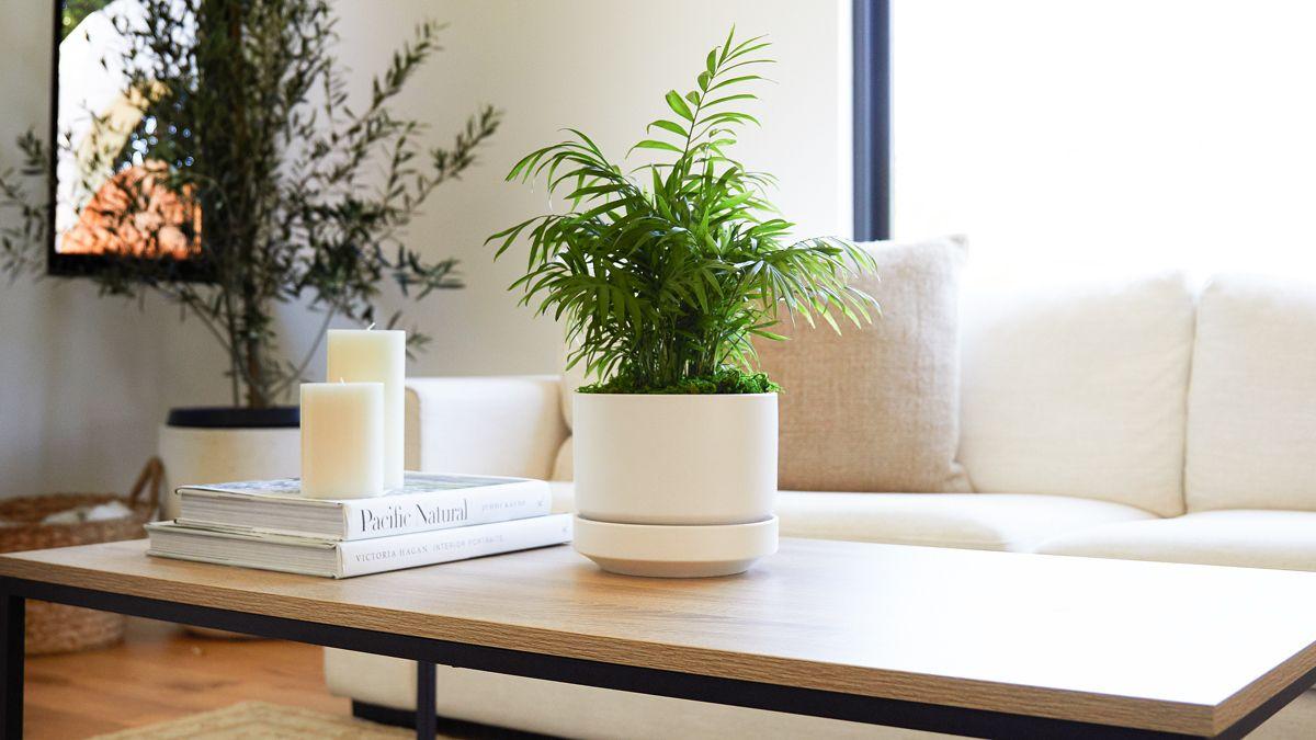 piante-stile-scandinavo-12