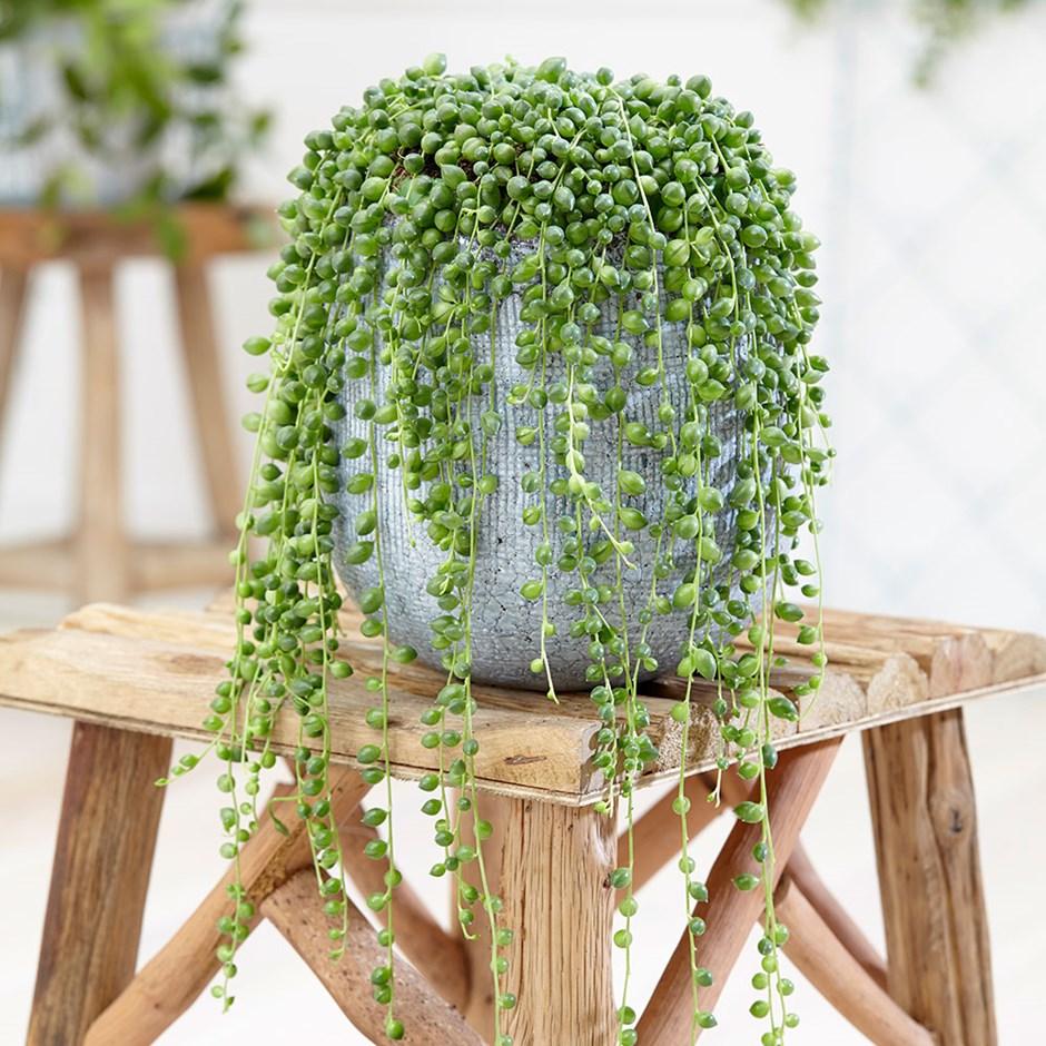 piante-stile-scandinavo-3