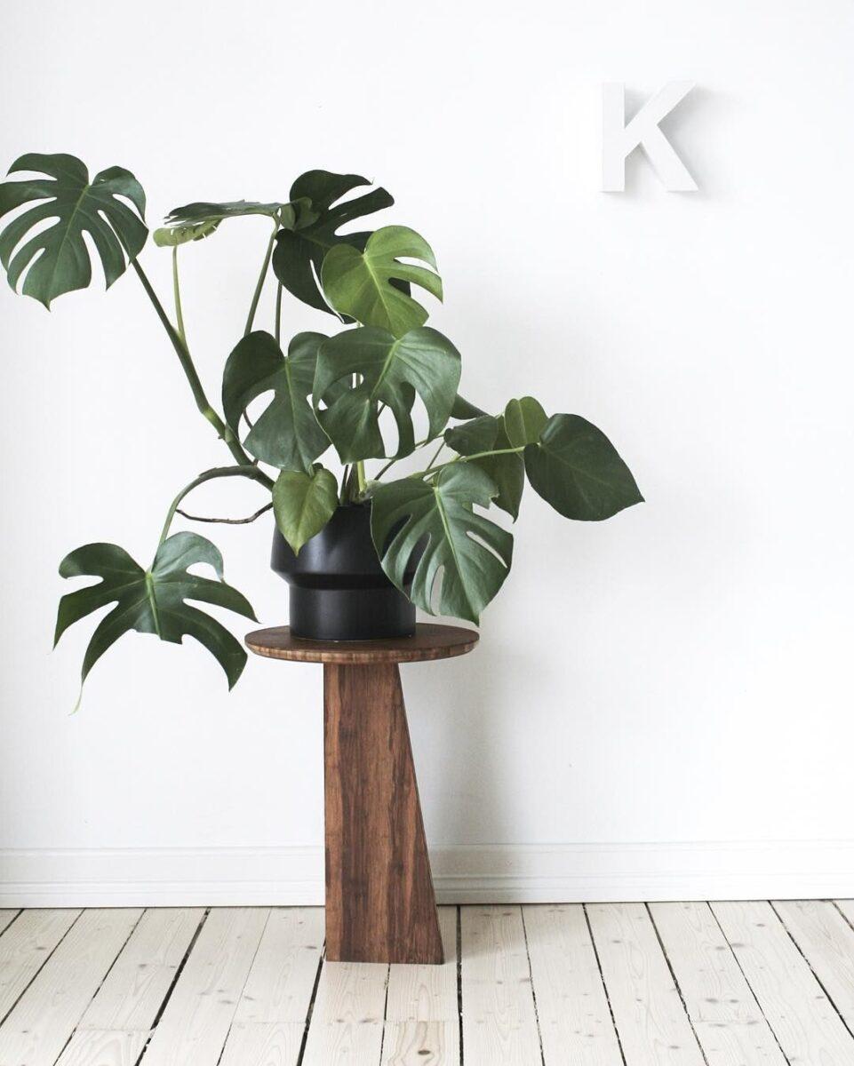 piante-stile-scandinavo-4