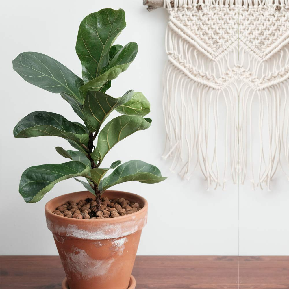 piante-stile-scandinavo-5
