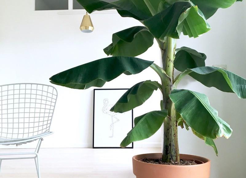 piante-stile-scandinavo-6