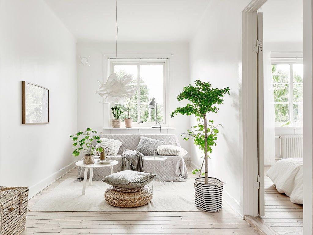 piante-stile-scandinavo-8