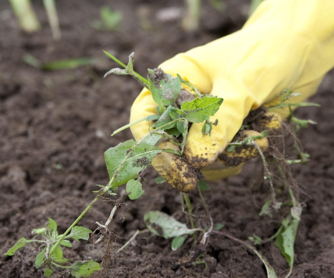come-sistemare-giardino-erbacce1