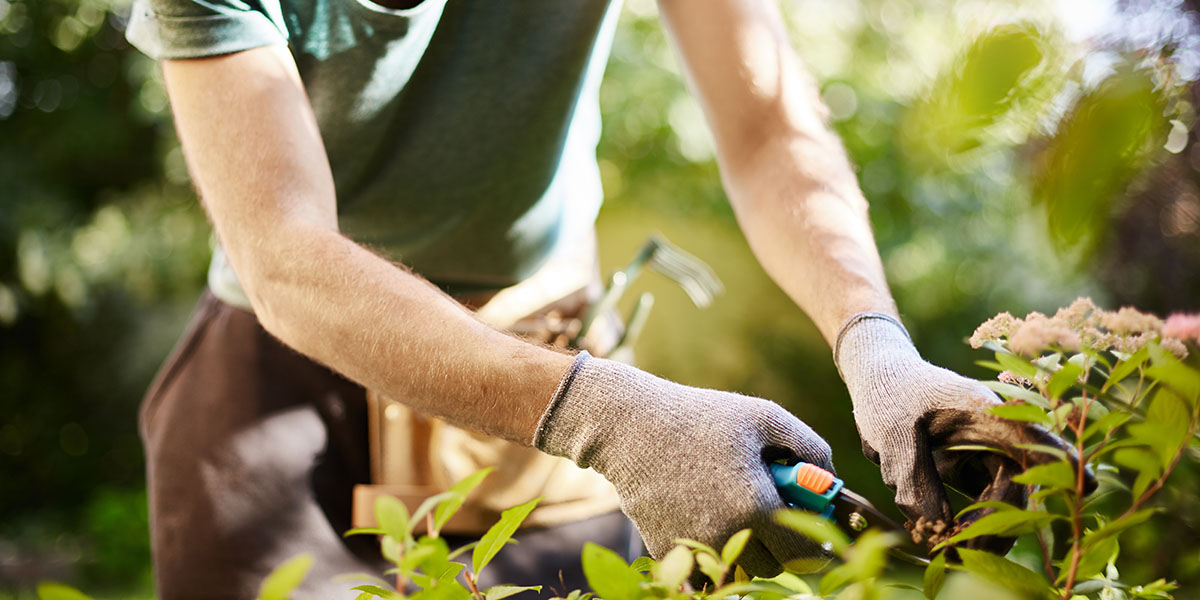 come-sistemare-giardino-nuovepiante
