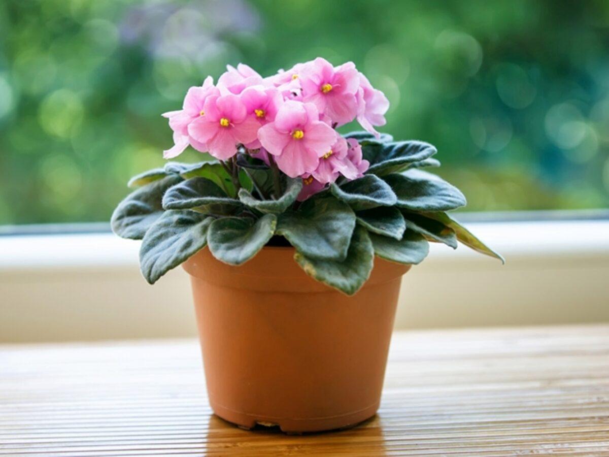 piante-da-avere-in-casa-in-ottobre-2