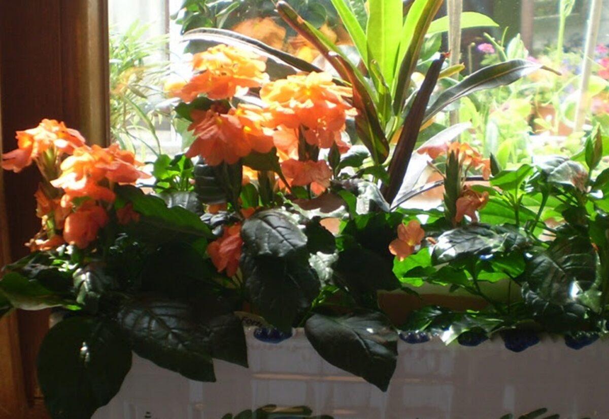 piante-da-avere-in-casa-in-ottobre-3