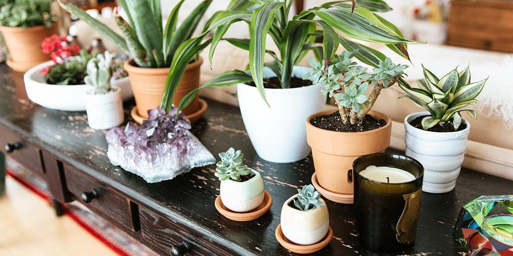 10-lavori-casa-novembre-piante1